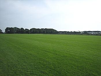 Färdig gräsmatta piteå